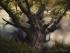 1600 Fallen Tree | Woodland Photography ©Manuel Maneiro