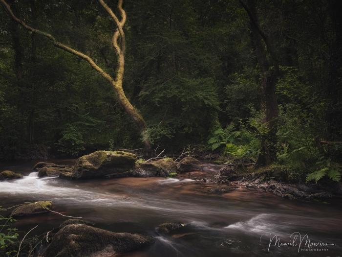 0123 Woodland Photography ©Manuel Maneiro