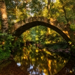 0637 Ancient Bridge Golden Forest Photography ©Manuel Maneiro