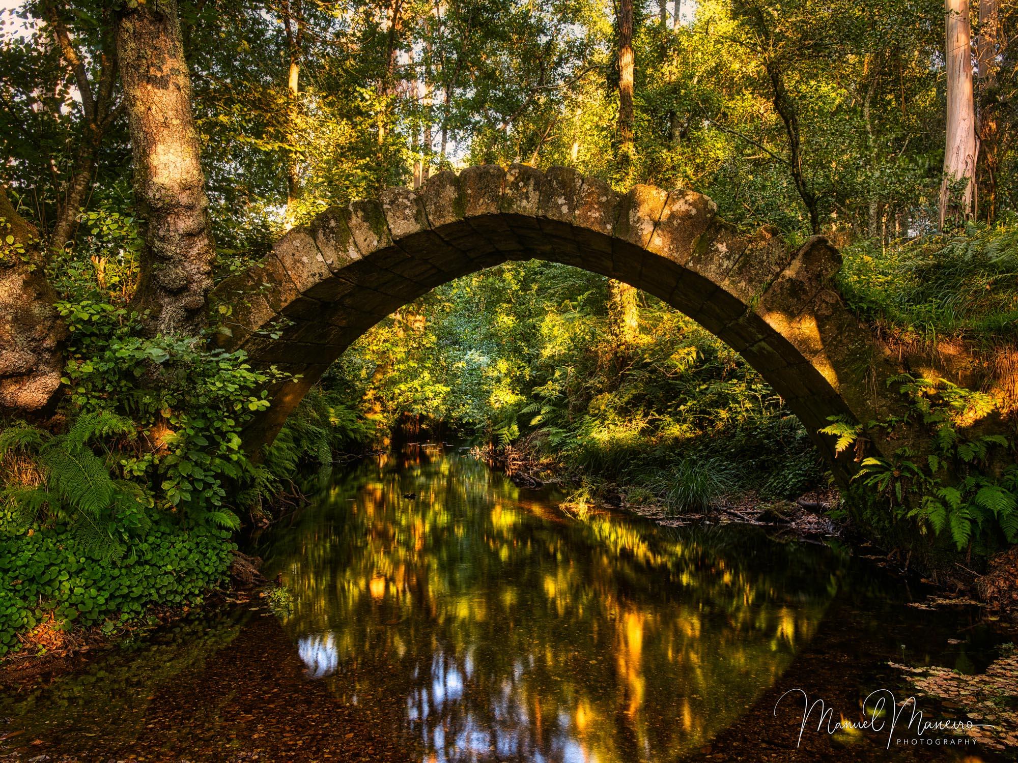 0637 Ancient Bridge Golden Forest Photography ©Manuel Maneiro