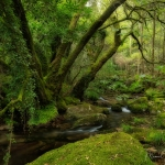1333 Mossy Forest Woodland Photography ©Manuel Maneiro