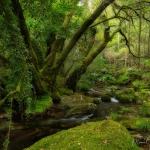 1333 Mossy Forest Woodland Photography ©Manuel Maneiro