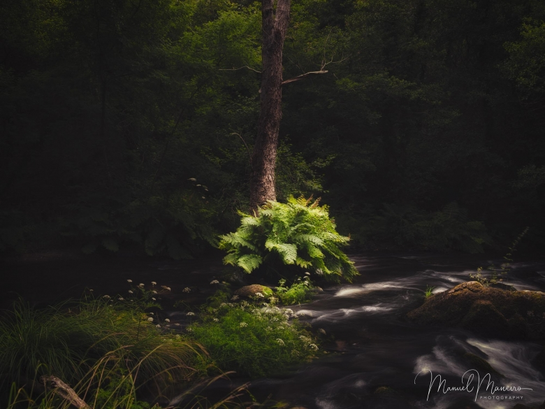 0124 Woodland Photography ©Manuel Maneiro