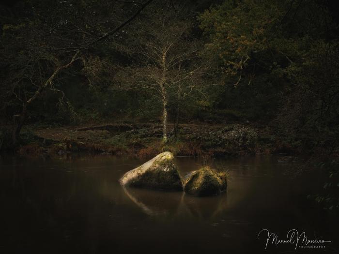 1587_Woodland Photography ©Manuel Maneiro