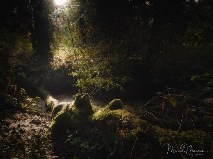 1651 Woodland Photography ©Manuel Maneiro