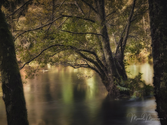 1668 River | Woodland Photography ©Manuel Maneiro