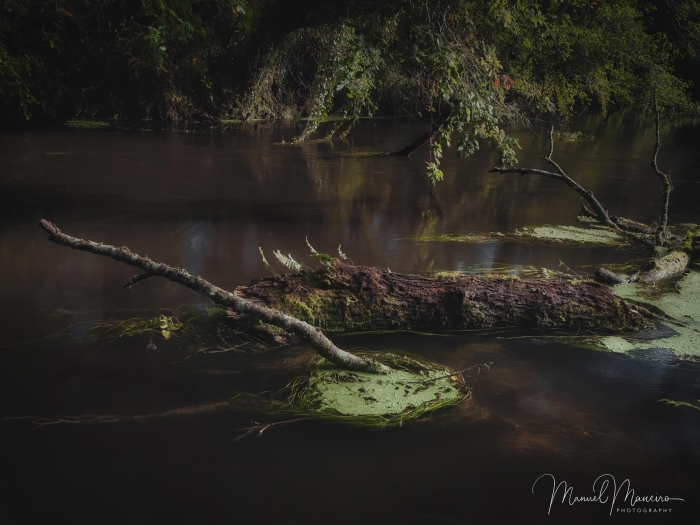 1676 Fallen log in river | Woodland Photography ©Manuel Maneiro