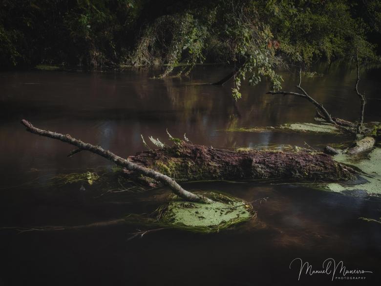 1676 Fallen log in river | Woodland Photography ©Manuel Maneiro
